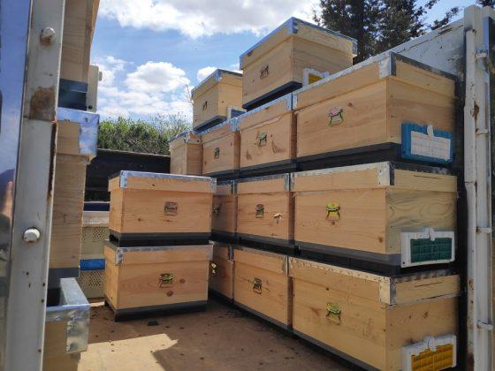 paket arı kovan 6