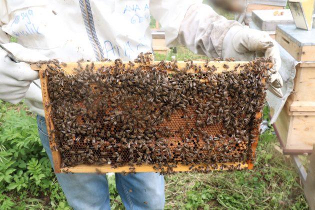 paket arı siparişi 1