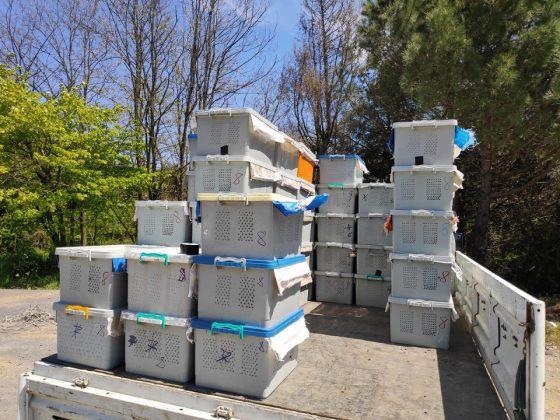 paket arı siparişi 11
