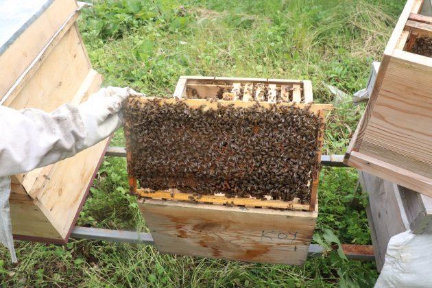 paket arı siparişi 2