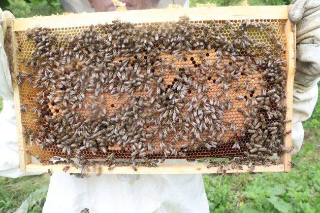 paket arı siparişi 3
