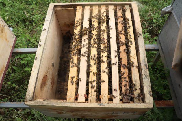 paket arı siparişi 4