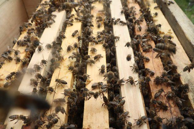 paket arı siparişi 5
