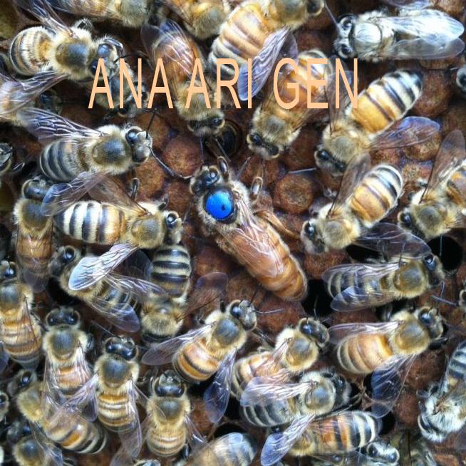 2020 yılı ana arı fiyatları 1