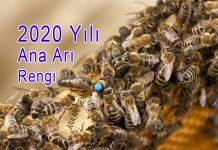 2020 yılı ana arı rengi