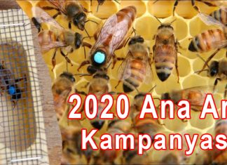 2020 ana arı kampanyası 1