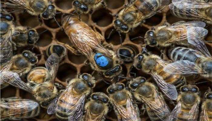 2020 ana arı kampanyası
