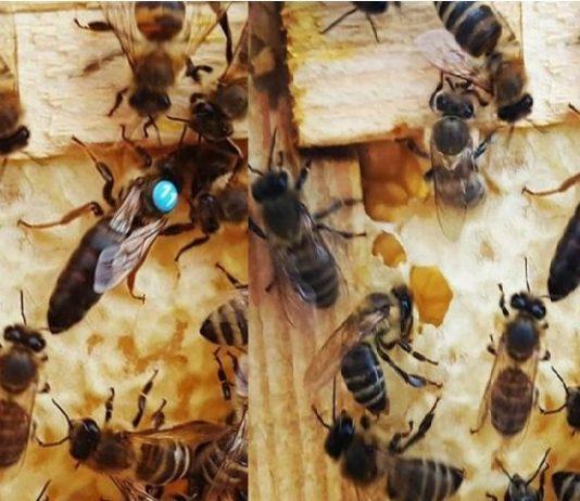 2020 ana arı kampanya sonuçları