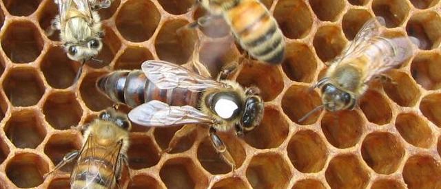 2021 ana arı fiyatları 1