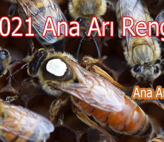 2021 ana arı rengi