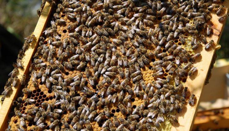 2021 paket arı satışı 1