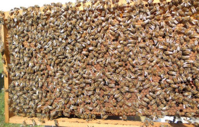 2021 paket arı satışı 2