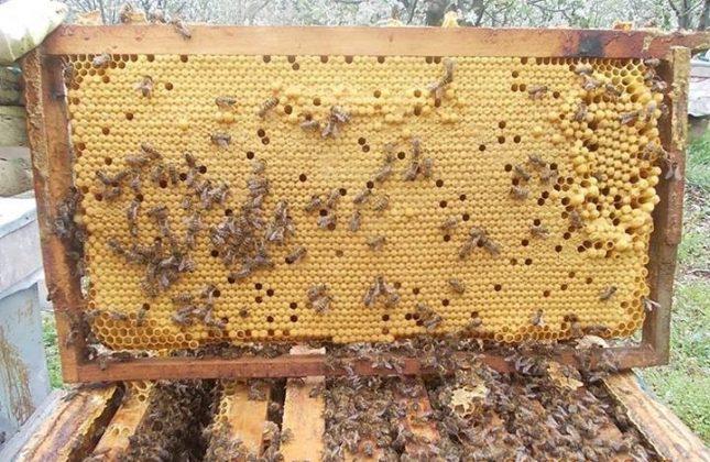 2021 paket arı satışı 3