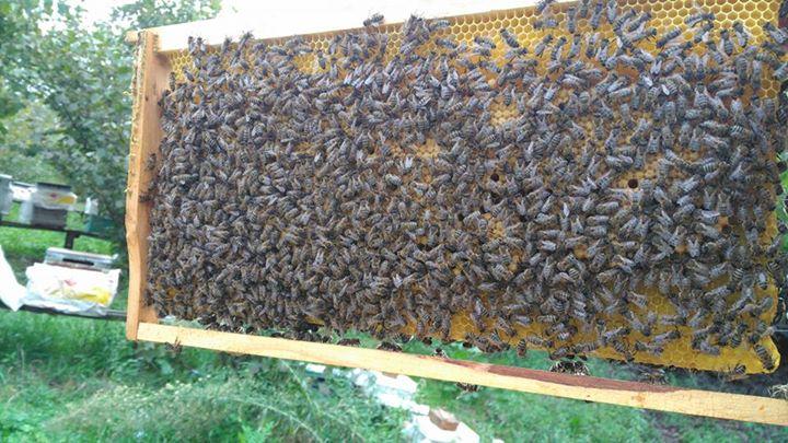 2021 paket arı satışı 4