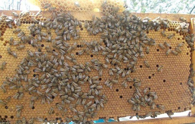 2021 paket arı satışı 5