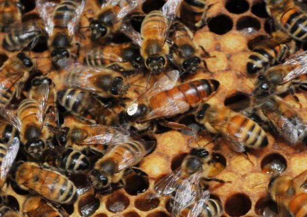 2021 yılı ana arı fiyatları 3