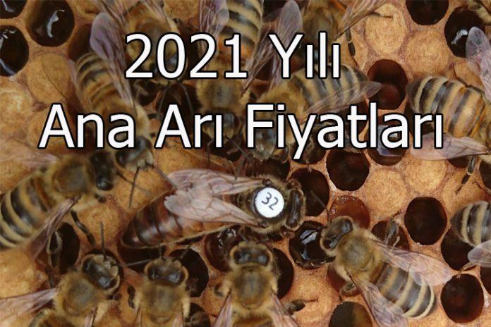 2021 yılı ana arı fiyatları
