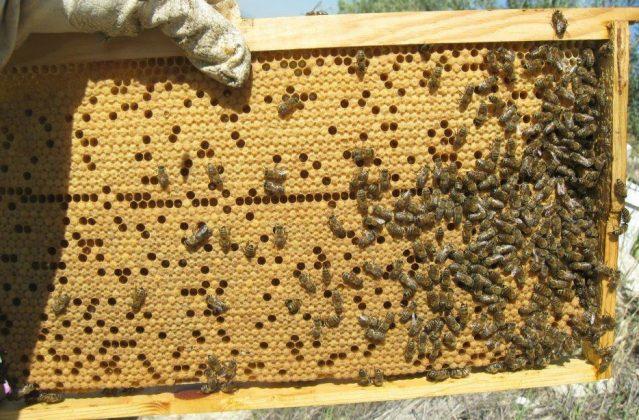 2021 yılı arı fiyatları 1