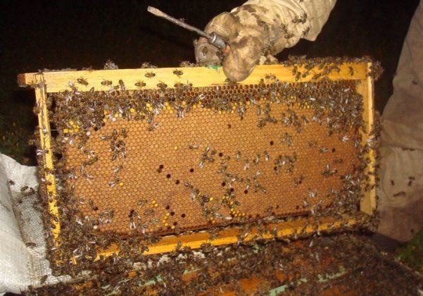 2021 yılı arı fiyatları 2