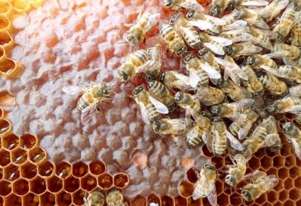 2021 yılı arı fiyatları 3