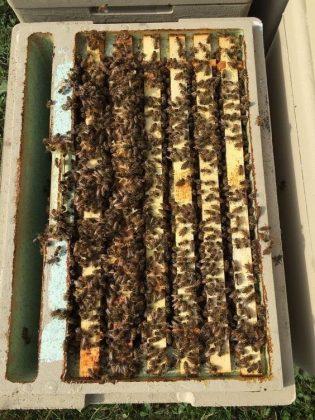 2021 yılı arı fiyatları 4