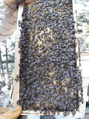 2021 satılık arı siparişi 1