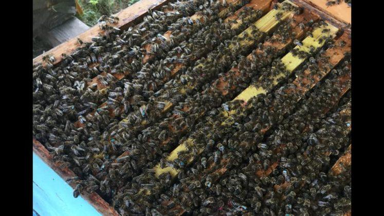 2021 satılık arı siparişi 2