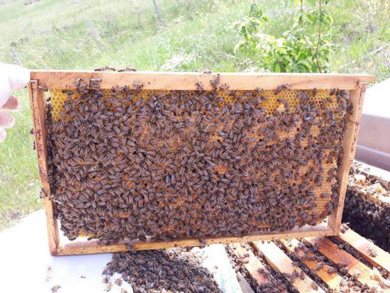 2021 satılık arı siparişi 3