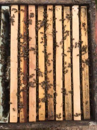 2021 satılık arı siparişi 4