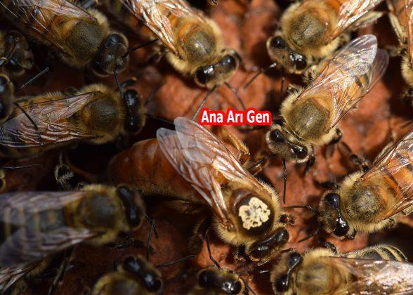 2021 yılı ana arısı 2