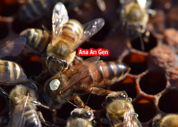 2021 yılı ana arısı 3