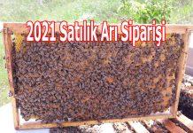 2021 yılı satılık arı siparişi