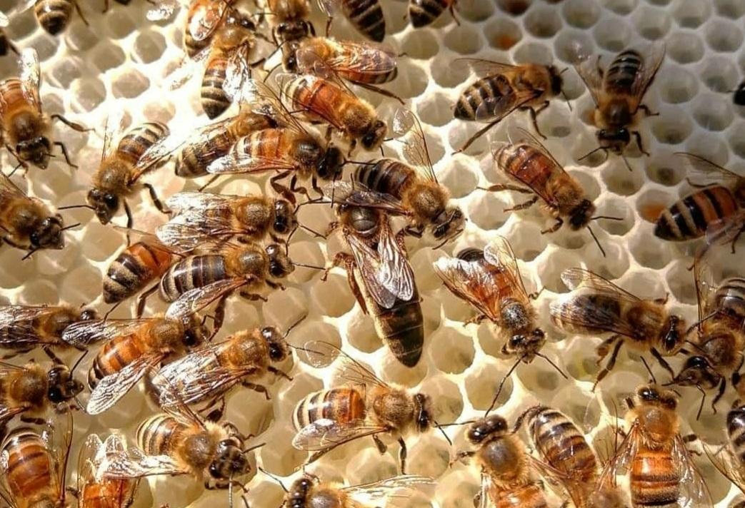 2021 yılı ana arı kampanyası 2