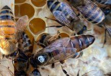 2021 yılı ana arı kampanyası