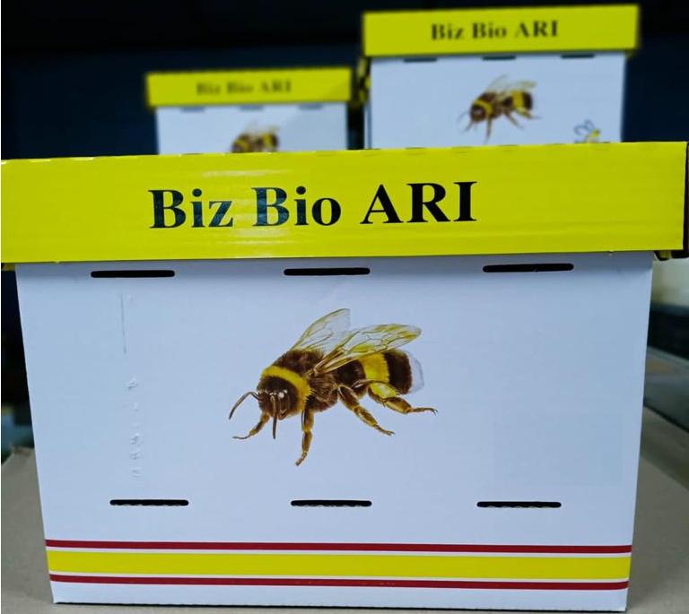 bombus arı paketi